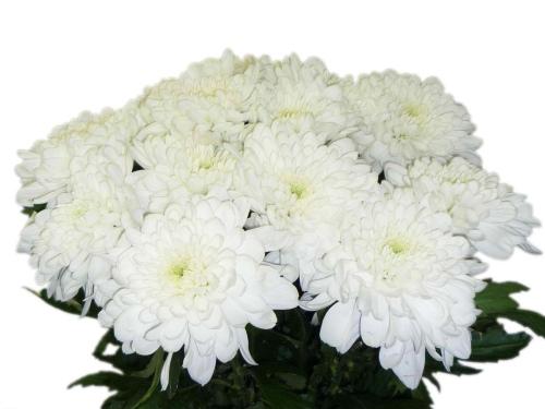 Цветы доставка балаково